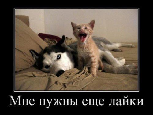 1367073709_demki-novye-13.jpg