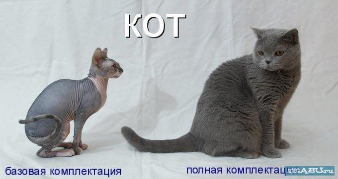 кот).jpg