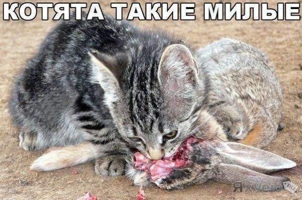 котята.jpg