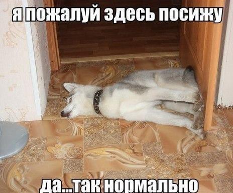 пес.jpg