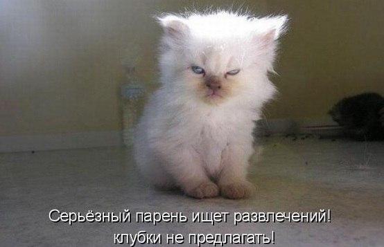 -pnCFeonpDE.jpg